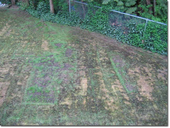 Picture of the lawn after the moss kill and thatching.