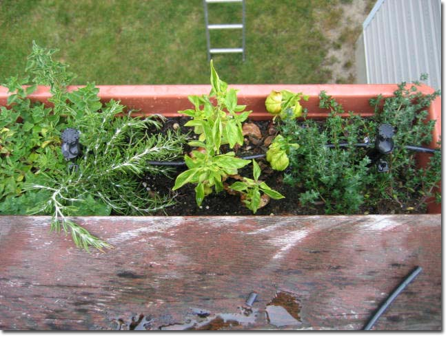 Herb container with multi-stream stakes